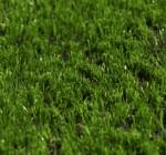 MAGIC GRASS 55 mm